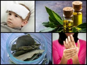 Amazing Health Benefits Bay Leaf Oil