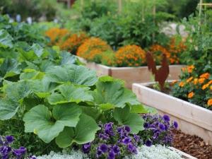 Best Summer Vegetables Grow Your Kitchen Garden