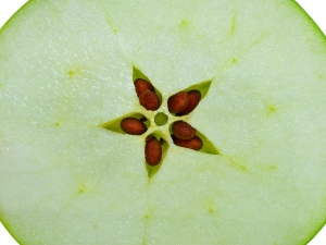 Apple Seeds Can Be Poisonous Here S What Happens When You Eat
