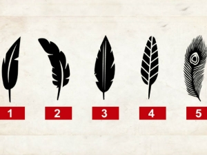 Choosing Feather From Here Can Reveal Your Personality Traits
