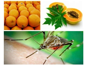 Home Remedies Fight Dengue This Season