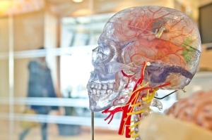 Study Says Women S Brains Are More Active