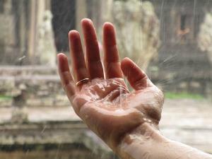 Monsoon Immunity Boosting Foods Fight Diseases Like Dengue