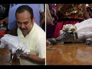 The Mayor This Country Married With Female Crocodile