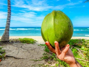 Benefits Using Coconut Water Skin Haircare