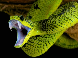 If Snake Bites Then Do Not Do These 5 Mistakes May Be Death