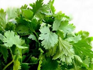 3 Best Ways Apply Use Coriander Leaves Skin Care