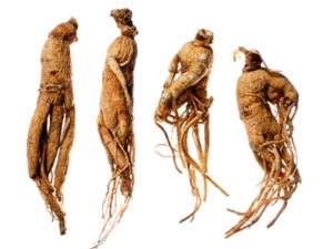Ginseng Help With Male Infertility