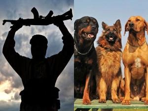 A Village Where Dog Eats Terrorist Dead Body