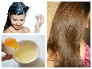 6 Diy Egg Conditioners Hair Growth