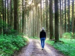 Health Boosting Benefits Of Forest Bathing Or Shinrin Yoku