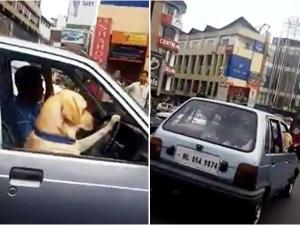 Shillong Dog Driving Video Goes Viral On Social Media