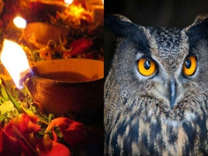 Know The Interesting Facts About Owls On Diwali