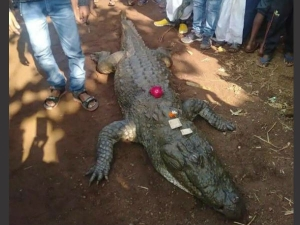Yr Old Crocodile Gangaram Dies 500 Villagers Attend Funeral