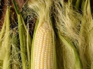 Amazing Health Benefits Corn Silk