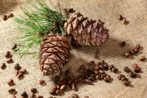 Incredible Health Benefits Pine Nuts Or Chilgoza