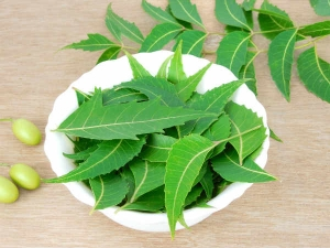 How To Make Neem Herbal Shampoo At Home