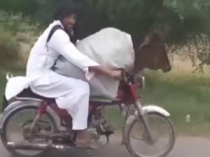 Pakistani Man Rides Bike With Cow Sitting In Front Clip Goes Viral