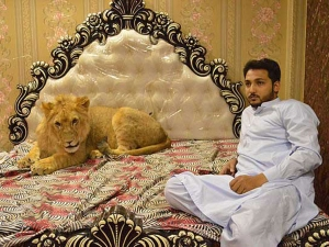 Meet Multani Man Who Keeps Pet Lion In His Bedroom