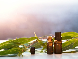 Amazing Benefits Of Eucalyptus Oil For Hair