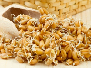 Should The Elderly People Not Consume Sprouted Grains