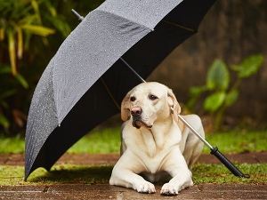 Tips To Take Care Of Your Furry Friend This Monsoon