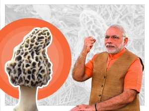 Pm Modi Eating These Mushrooms Which Cost Rs 30 000 Per Kg