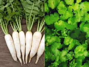 Why You Should Not Eat Radish And Coriander According To Ayurveda In Magh