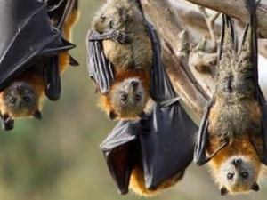 Coronavirus May Have Come From Bats Studies