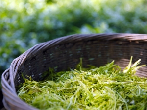 Dill Leaves Benefits For Diabetes