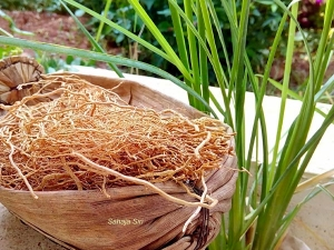 Health Benifits Of Drinking Khus Root Water Or Vetiver Infuses Water
