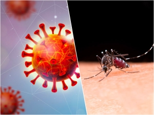Know The Difference Between Symptoms Of Covid 19 And Dengue