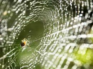How To Get Rid Of Spiders And Spider Webs From Home
