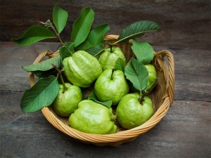 Try This Guava Leaf Remedy To Control Diabetes And Blood Cholesterol Level