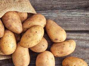 Origin And History Of Potatoes