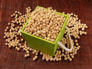 Health Benefits Of Soy In Hindi