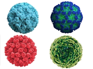 Norovirus Outbreak Know Norovirus Symptoms How It Is Transmitted Treatment And Prevention In Hind