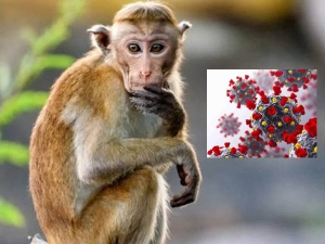 China Reports First Human Death From Monkey B Virus Know What It Is Symptoms And Treatment In Hind