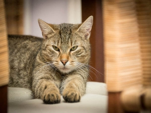 Reasons Why Your Cat Is Oversleeping In Hindi