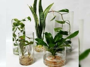 Indoor Water Plants That Grow In Water In Hindi