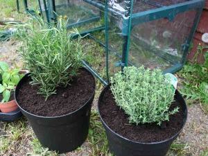 Tips For Containers Gardening For Beginners In Hindi