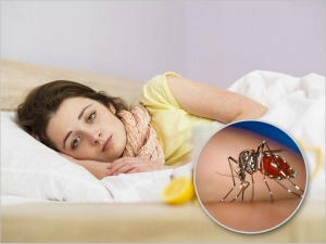 Newer Dengue Variant Denv 2 Spotted Know Why This Is So Dangerous