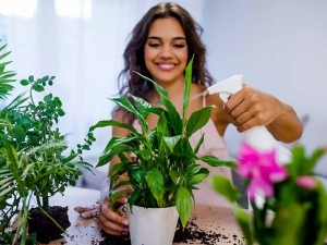 Tips To Keep Plants Healthy In Rainy Season In Hindi