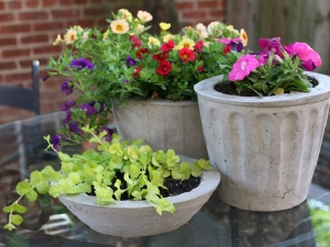 Different Ways To Make Your Own Planters In Hindi
