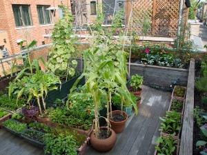 How To Design Beautiful Your Terrace Garden In Hindi