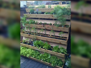 Different Ways Of Vertical Gardening On Terrace Garden In Hindi
