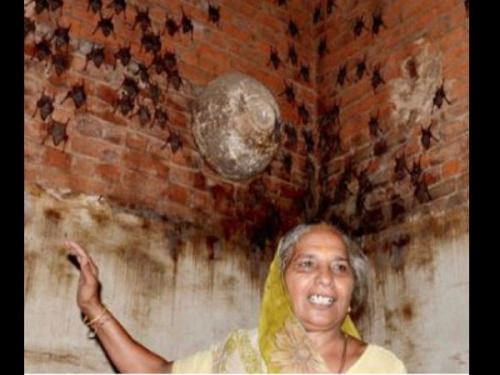 400 चमगादड़ के साथ रहती है ये महिला, Nipah Virus का नहीं डर