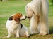 अपने पालतू जानवर की दुर्गंध को दूर करने 5 तरीके