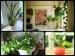 सुकून की नींद पाने के लिये बेड़रूम में लगाएं ये 5 पौधे