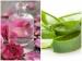 घर पर कैसे बनाएं गुलाब और ऐलोवेरा का जैल